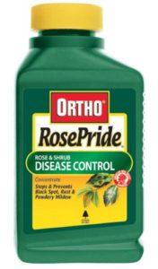ortho-rose-pride