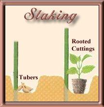 staking1
